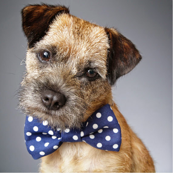Cotton Bow Tie for dogs