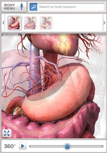 lær anatomi