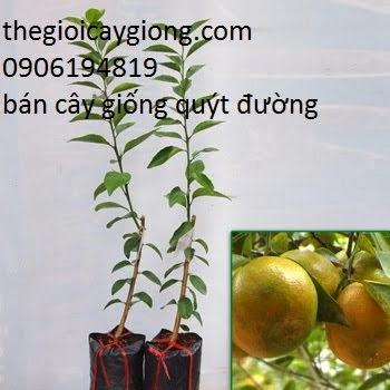 Giống cây trồng mới