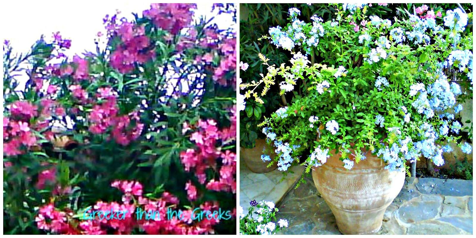 Colourful Greek flowers