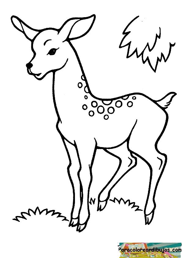 dibujo de ciervo para colorear