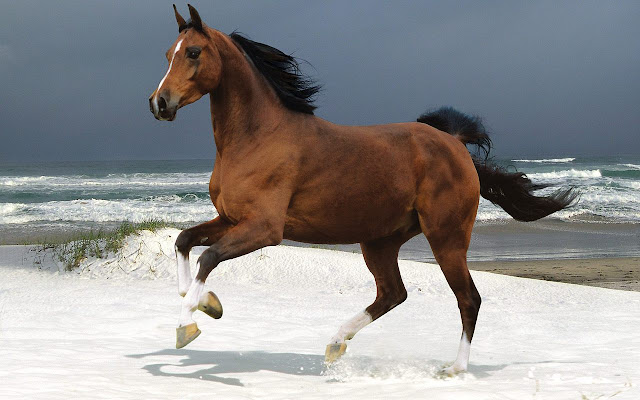 horses+wallpapers+%25282%2529