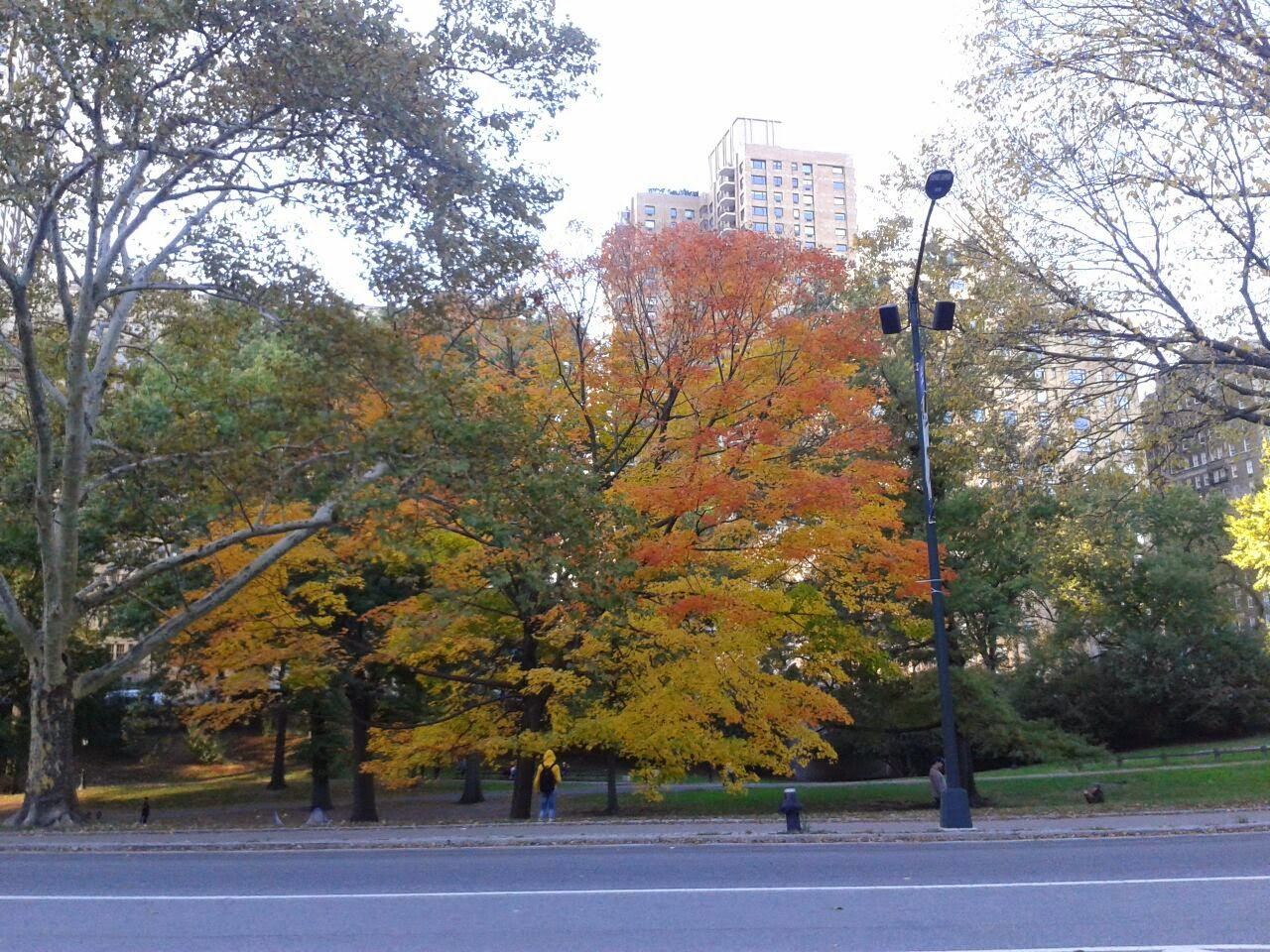 imagen de Árbol dorado de otoño, Centra Park