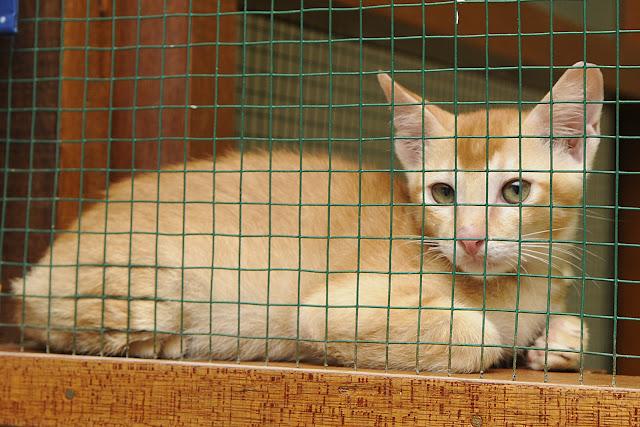 kitten rescue shelter bali