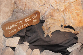 Grand Canyon Caverns Mummified Bob Cat
