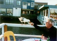 روزی ما دوباره کبوتر هایمان را پیدا خواهیم کرد