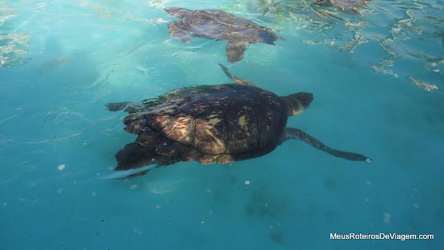 Alimentação das tartarugas no Projeto Tamar Floripa - Barra da Lagoa