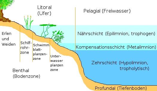 ökosystem als einheit von biotop und
