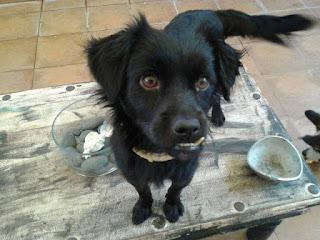 Βρέθηκε στην παραλία της Κινέττας αρσενικό σκυλάκι χωρίς τσιπάκι