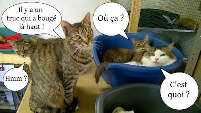 4 copains chats qui trainent ensemble