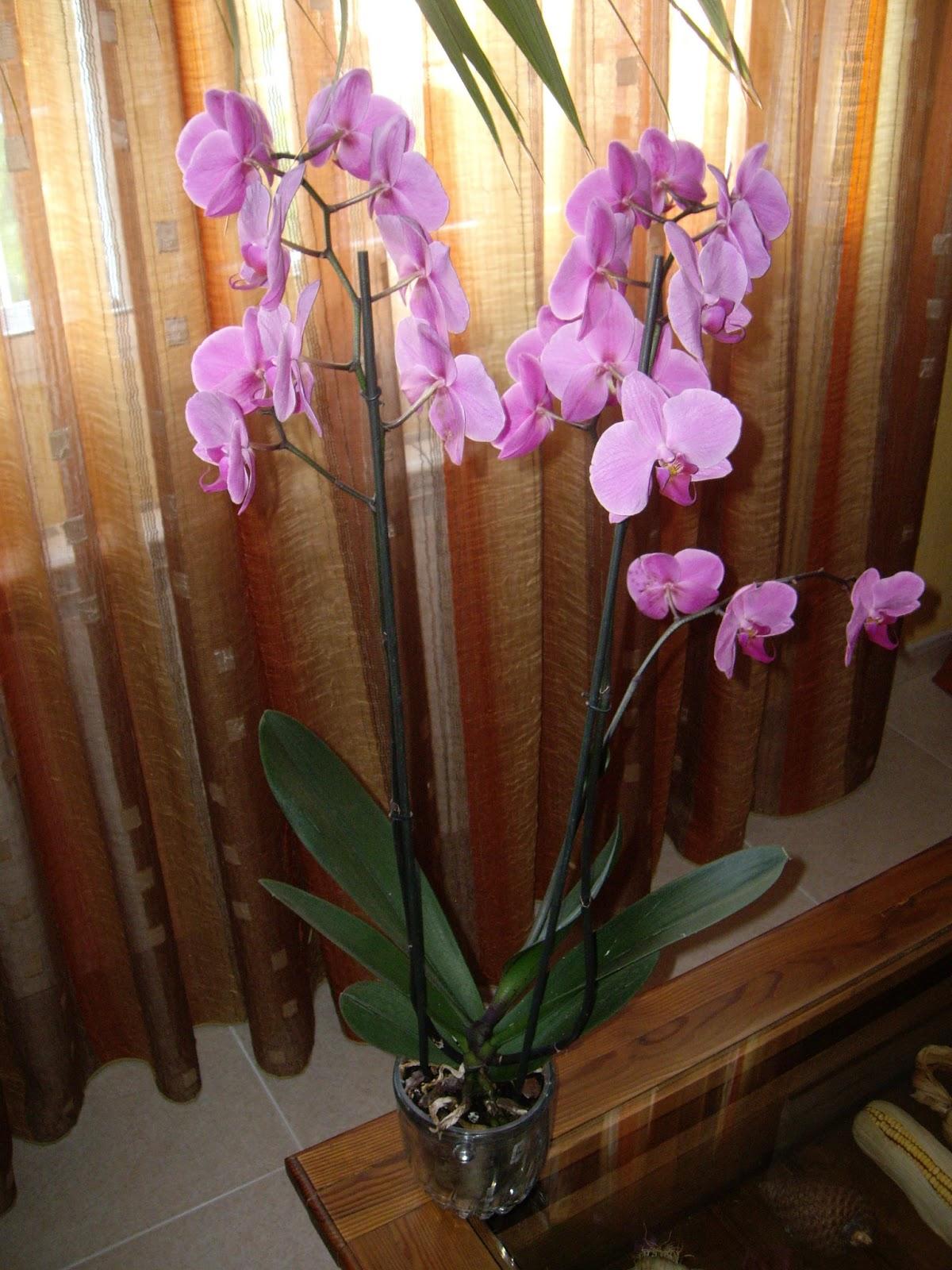 La mar de verde el cultivo de orquideas for Cuidados orquideas interior