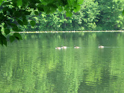 Day & Night at Green Lake (Haiku Series)