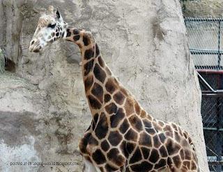 Foto-foto Binatang Aneh dan Menakjubkan