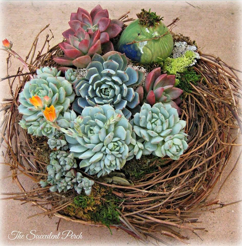 Andyaaf cactus y suculentas for Cactus y suculentas