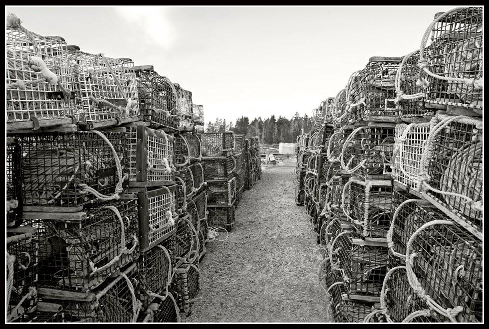Nova Scotia; Lobsters; Traps
