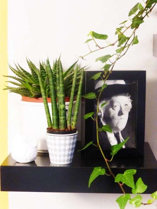 Deko Pflanzen Plants Kakteen Miss Marple