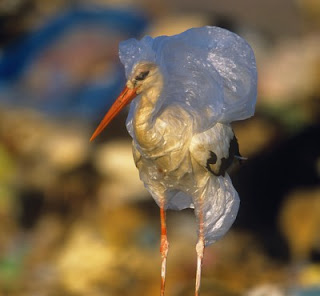 http://www.trueactivist.com/hawaii-just-banned-plastic-bags-at-grocery-checkouts/