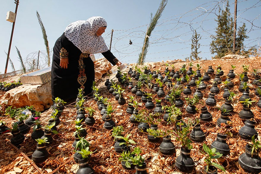 palestinian woman plants flowers in israeli army tear gas grenades. Black Bedroom Furniture Sets. Home Design Ideas