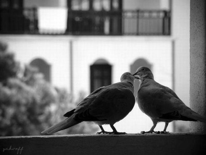 романтика чёрно белые картинки