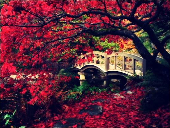 pokok-tercantik-di-dunia