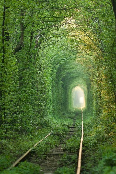 """the everlasting forest in Germany is a must see"""