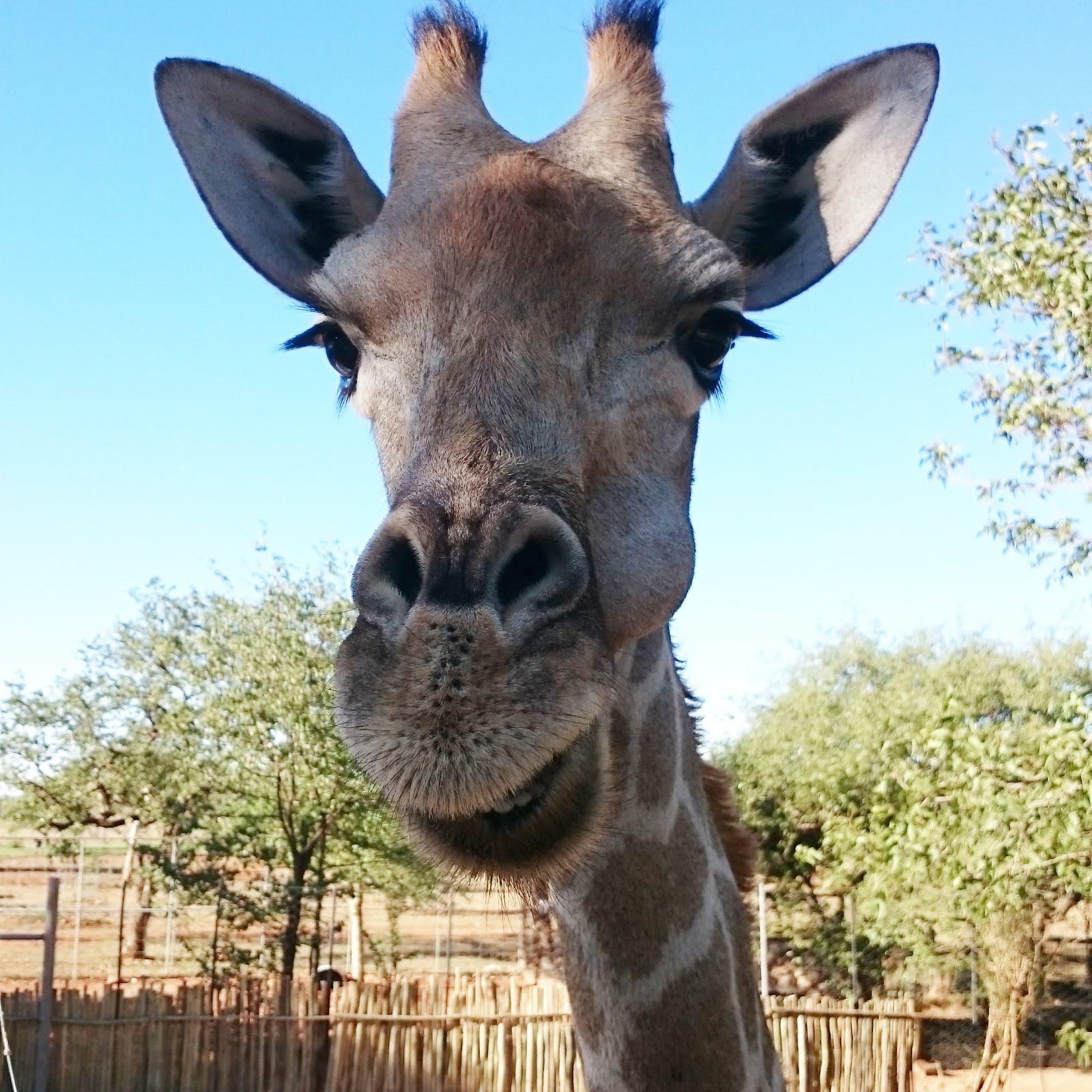 Namibia Travel-Diary