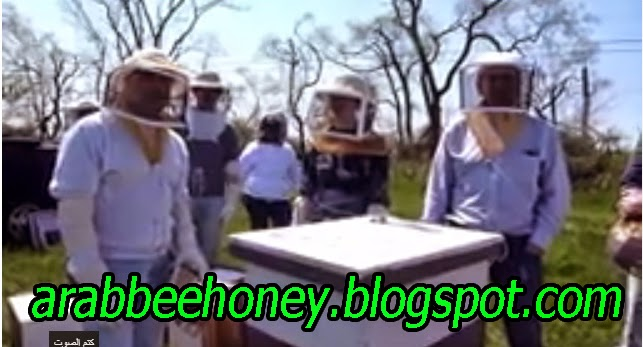 Video-Beekeeping Basics and Splits/Swarm Meeting