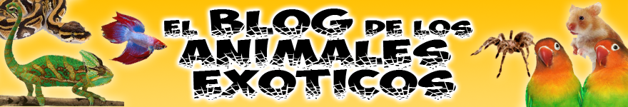 El blog de los animales exóticos