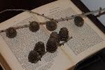 En gammel bibel etter min tippoldermor Hanna og noen lerkekongler