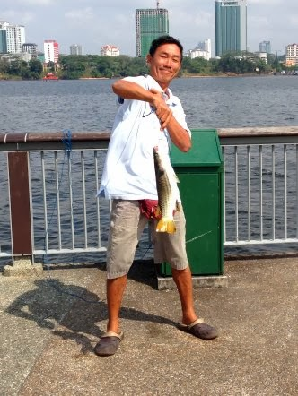 Mullet or Chow Orh [ 草乌 ] or Belanak Caught by Ah Wong weighing 2kg at Woodland Jetty on 10th March 2014