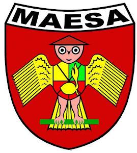 Maesa