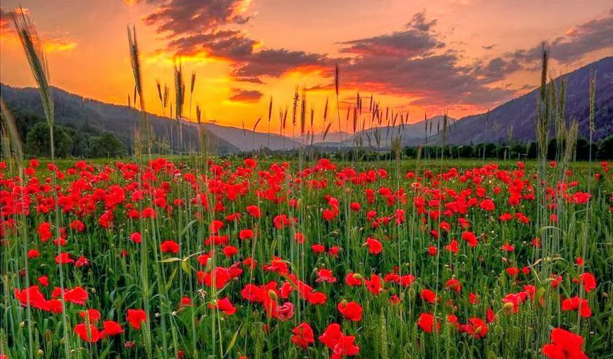 Keindahan Alam Semulajadi Memukau Pandangan Mendamai Hati