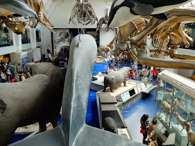 Mammal (Blue Whale) Gallery: Both Ends