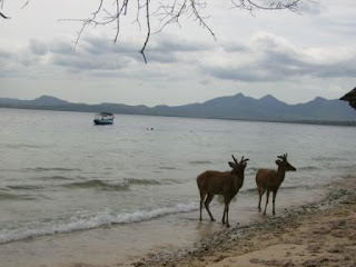 Holiday in pulau menjangan, pulau menjangan bali, taman nasional bali barat