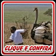 Clique ou fique Louco de Curiosidade - 4