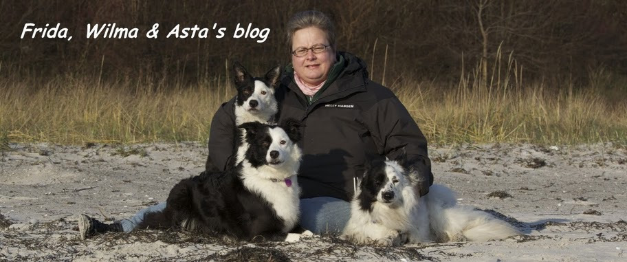 Frida, Wilma og Asta's blog