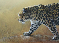 International Wildlife Art Showcase