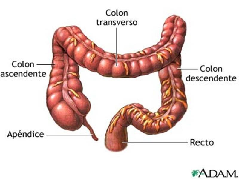Encantador Cuerpo Humano Diagrama De Colon Ornamento - Anatomía de ...