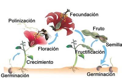 Reproduccion sexual de las plantas medicinales