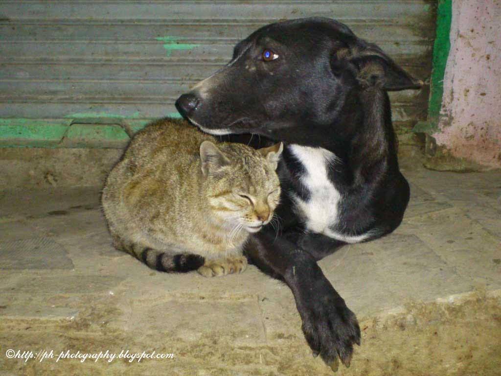 Dog Successfully Mates With Cat