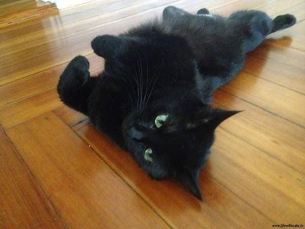Magnifique photo chat noir
