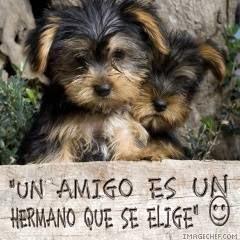 amistad con perritos
