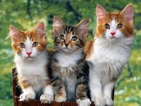 7 Makanan yang Bisa Bikin Kucing Mati