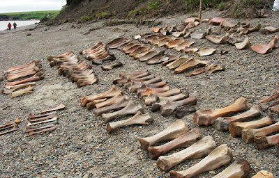 Stone Age Siberians may have rarely hunted mammoths