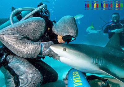 Cristina Zenato, Penyelam Wanita Hipnotis Ikan Hiu