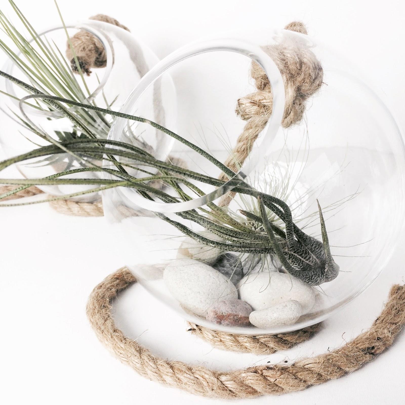 Zimtzebra airplants meine tillandsien im glasball for Rankpflanzen wohnung