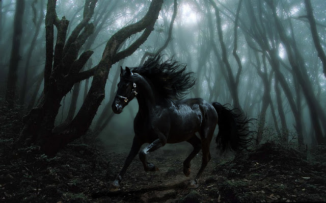 Black Horse in the Night