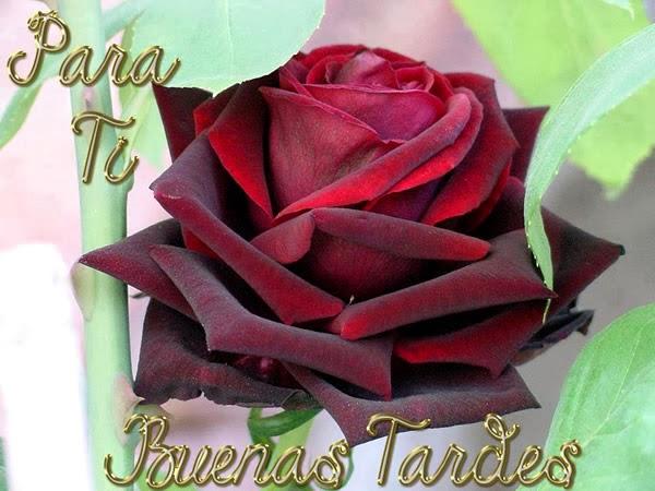 Buenas Tardes Para Ti | Imágenes y Postales de Amor