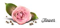 リアルな花のイラストのフリーアイコン素材いろいろ。バラやユリ、オランダカイウなど。