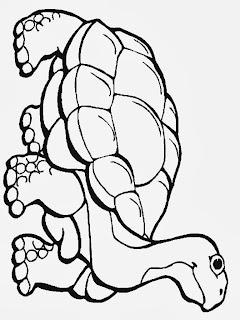 Ausmalbild Fische Oktopus, Seehund Ausmalbilder - Schildkröten Bilder Zum Ausmalen